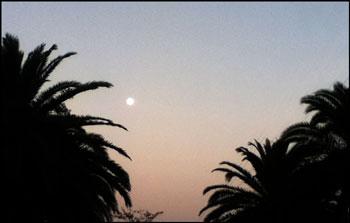 まじまじと月を見たのは・・・久しぶり・・・でした