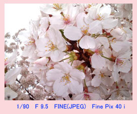 sakura-home.jpg