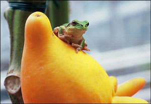 06.03.03-Frog-01.jpg