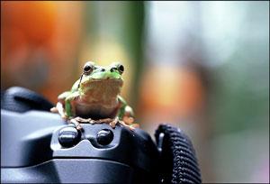 06.03.03-Frog-02.jpg