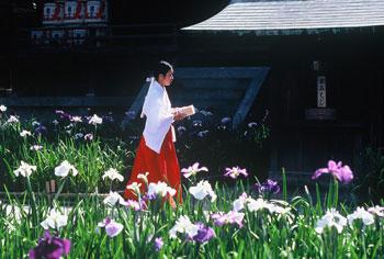 菖蒲祭りからの一コマ・・・